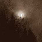 'Phosphorescence'